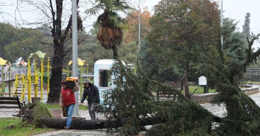 Rüzgar Atatürk Parkı'nda ağacı yıktı