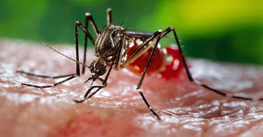 Zika virüsü için korkutan rapor
