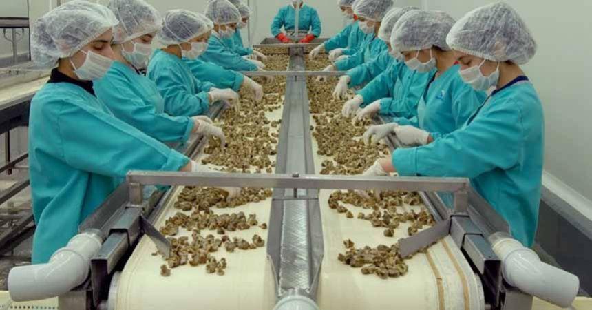Samsun, 23 milyon dolarlık hayvansal ürün ihraç etti