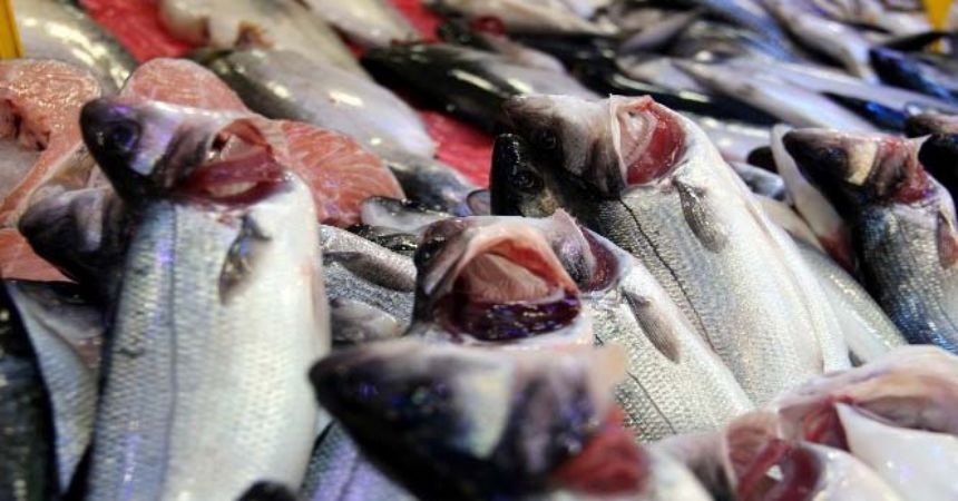 Balıkçıların hayali başka sezona kaldı