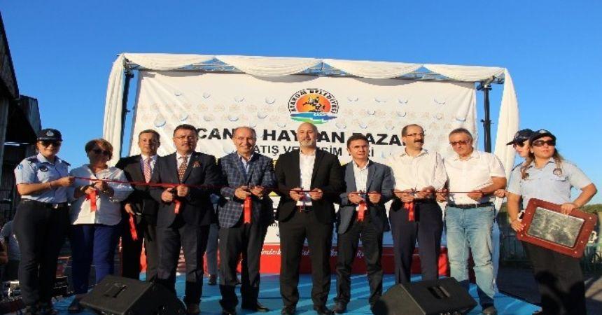 Atakum'da hayvan pazarı açıldı