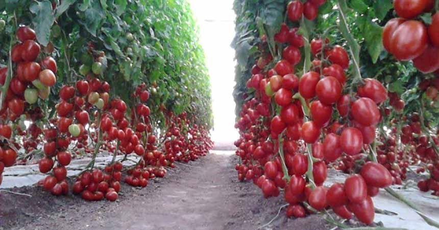 Ordu'da organik tarıma sıkı denetim