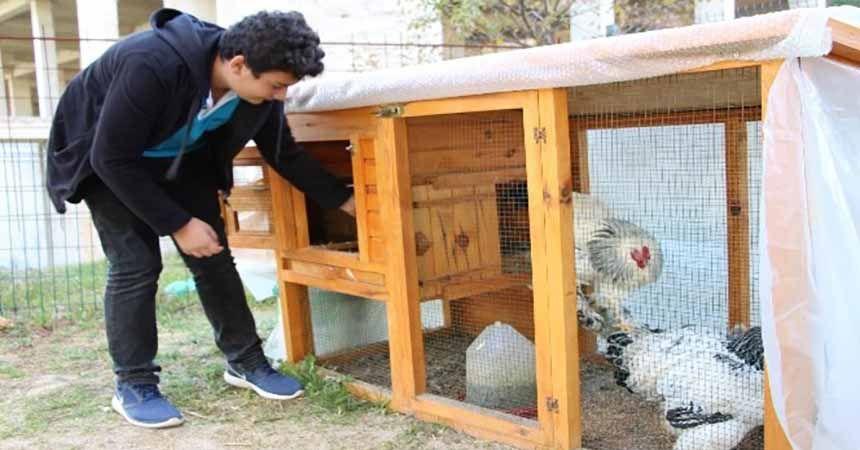 Liseyi tavuklarıyla okuyor