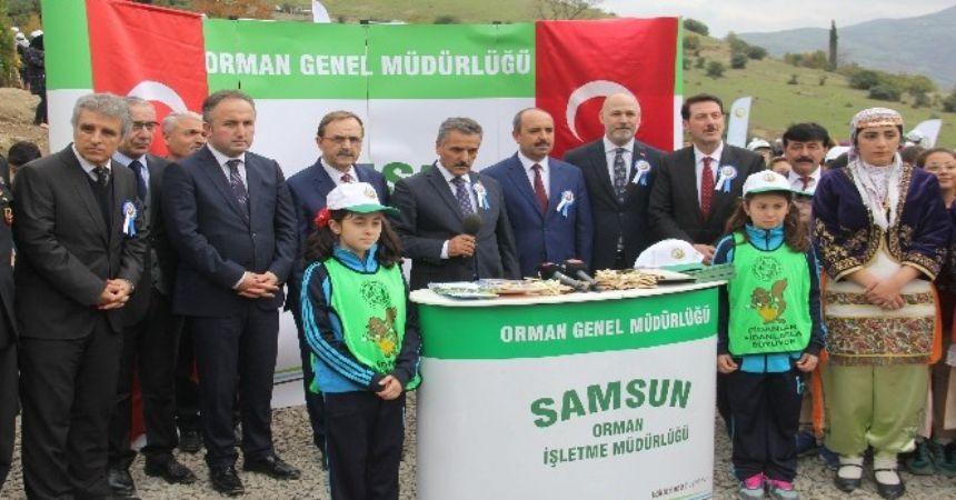 Samsun'a 3 bin fidan