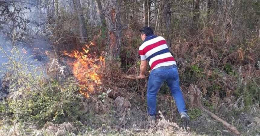 Sinop'ta 5 dönüm orman kül oldu