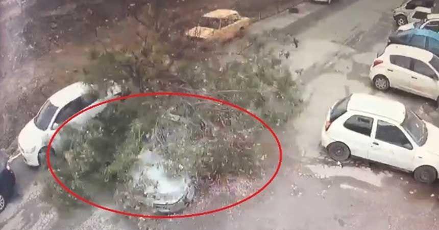 Test sürüşü yaparken üzerine ağaç devrildi