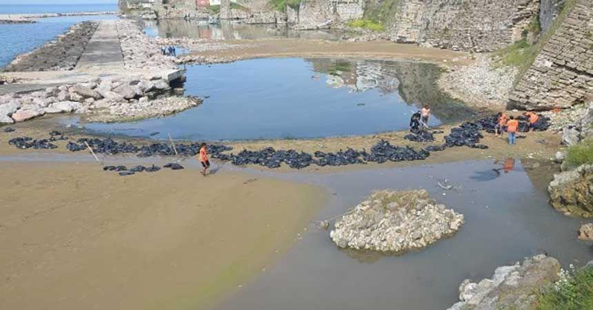 Sahile vuran yosunlar temizleniyor