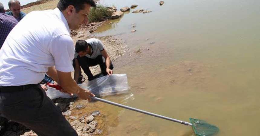 Göllere 120 bin yavru alabalık bırakıldı