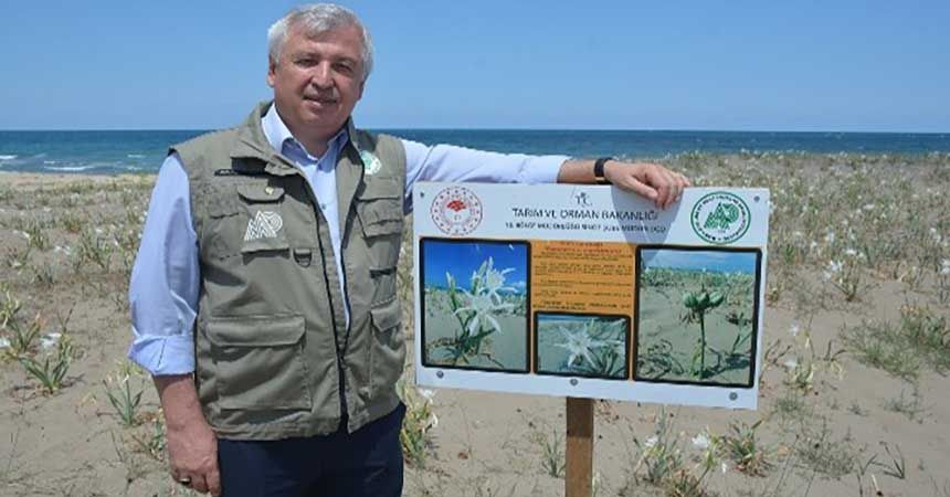 Kum zambağını koparmanın cezası 60 bin lira