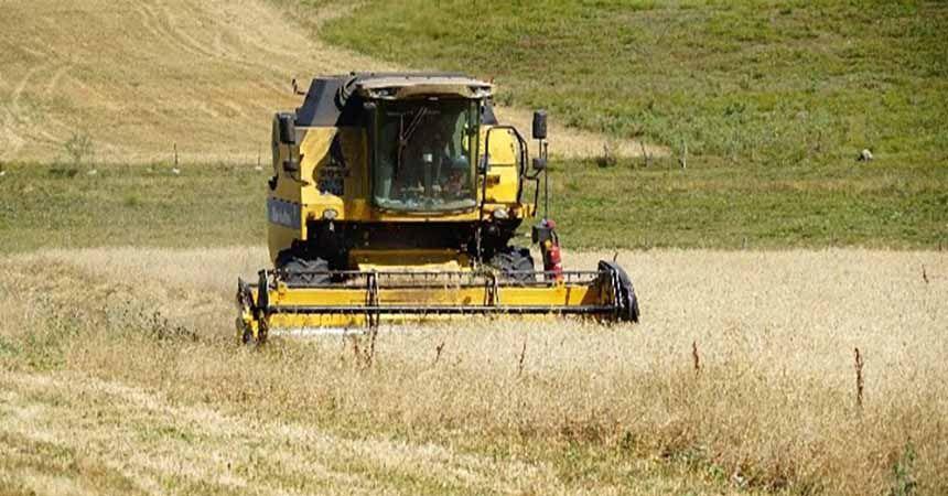 Tarihi siyez buğdayı elde kaldı