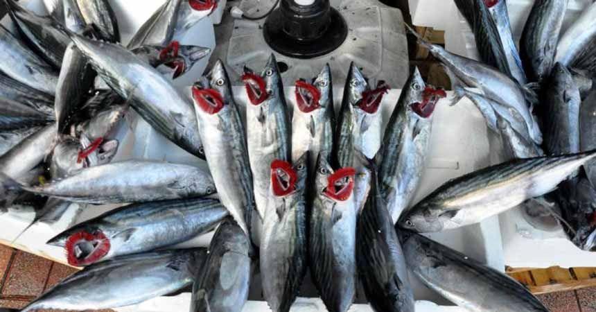 Balıkçılar palamutu bekliyor!