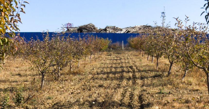 Santralin yanında meyve üretiliyor