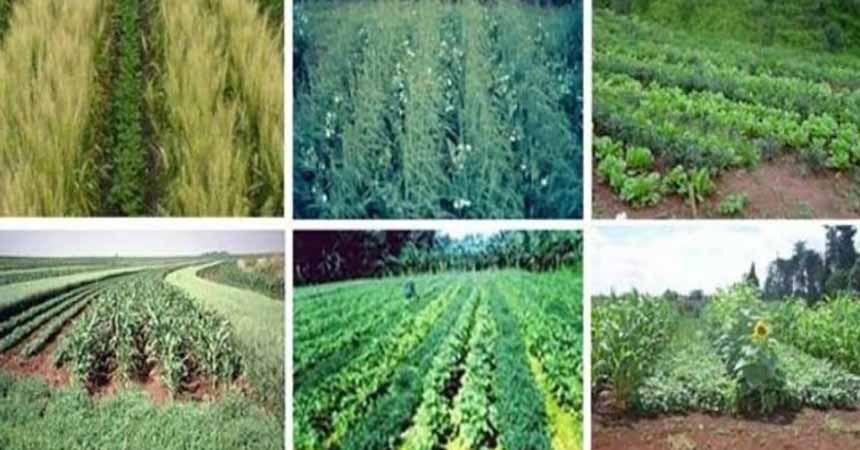 Tarımsal desteklemede 'ekim nöbeti' şartı