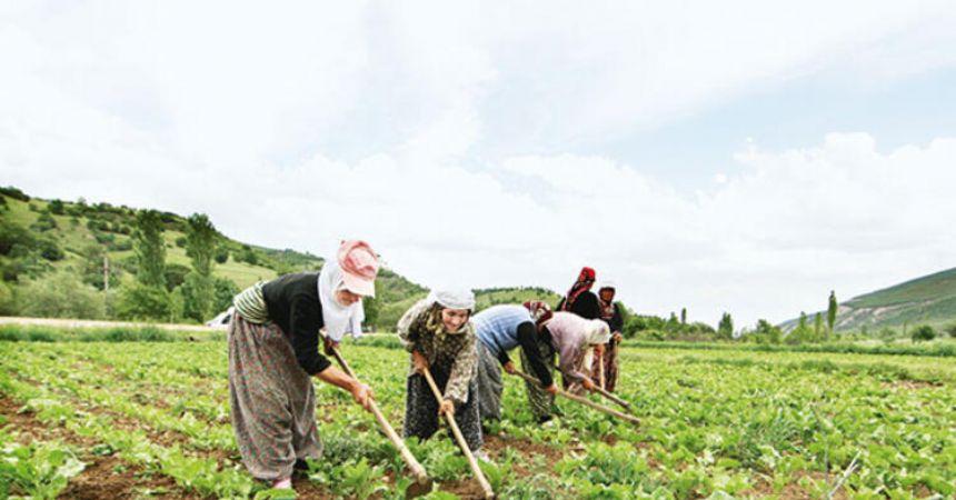 Çiftçi desteği başlıyor