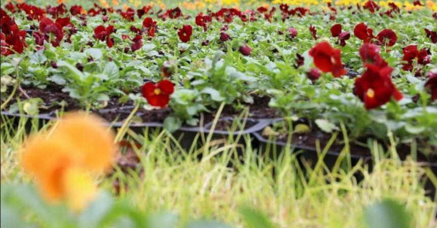 100 Bin çiçek toprakla buluştu