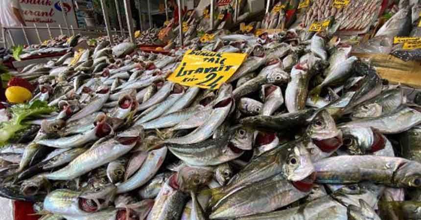 Balık sezonu bereketli başladı