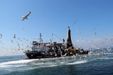 Karadeniz'deki balıkları yunuslar bitirmiyor