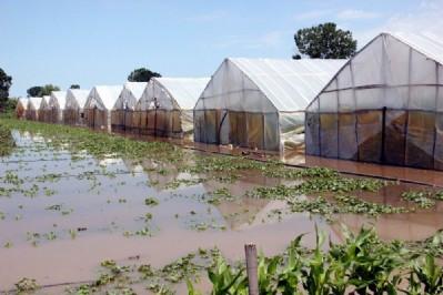 Yağış tarım arazilerini vurdu