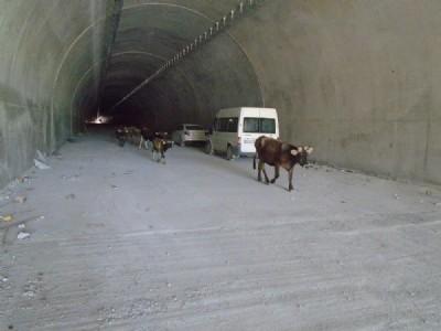Ovit'teki Çığ Tüneli'ni ilk onlar kullandı