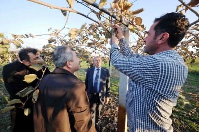 Kivi ve şeftali üretimi artıyor