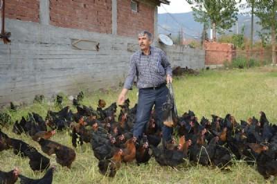 Kızı için tavuk çiftliği kurdu