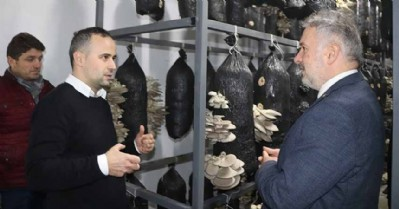 Ayvacık'ta istiridye mantarı tesisi kuruldu