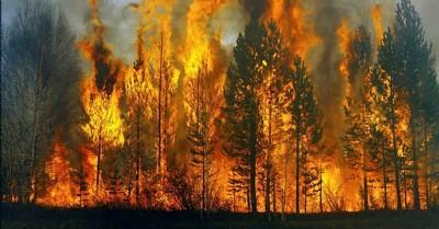 Ormanlar 840! kez kasten yakıldı