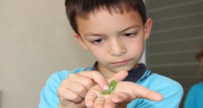 İlkokulda ipek böcekçiliği
