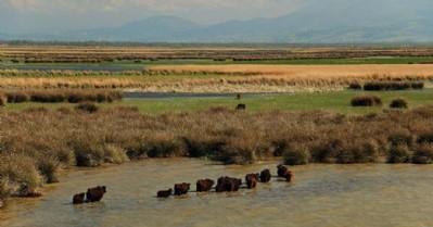 Delta için 'Su Ayakizi Raporu' hazırlandı