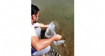 Binlerce sazan göllere bırakıldı