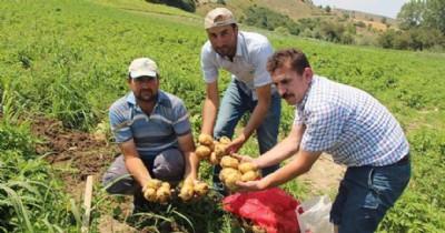 Yazlık patates hasadı başladı