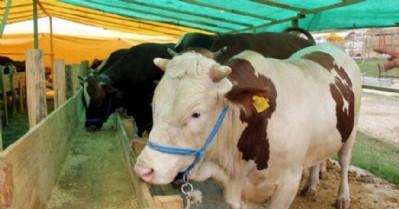 Kurbanlık hayvanlara sorgulama sistemi