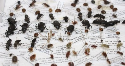10 yılda 100 bin böcekle müze açtılar