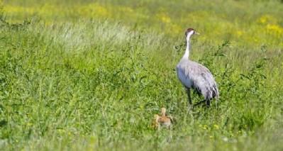 Anadolu turnası kuş cennetinde
