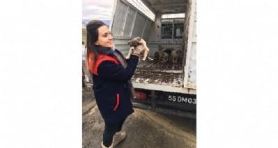 Demirtaş'tan hayvan çağrısı