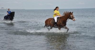 Atlara denizde idman
