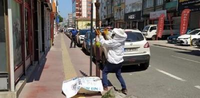Şehre inen arılara zabıta müdahale etti