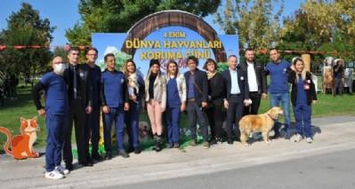 Samsun'da Pati Şenliği