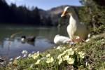 Limni Gölü'nde sezon hızlı başladı