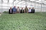 Tokat'ta 1.5 milyon sebze fidesi dağıtılacak